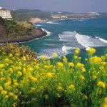韓國濟州島蜜月旅遊 演繹一路浪漫